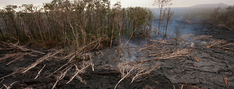 Килауэа лес