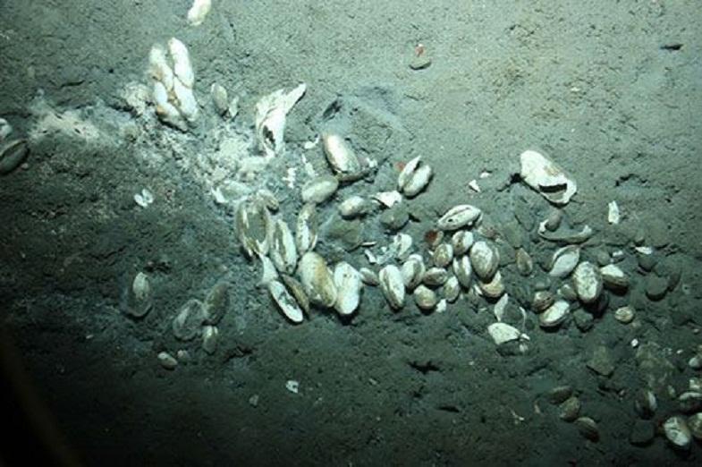 Моллюски, обитающие возле вулкана
