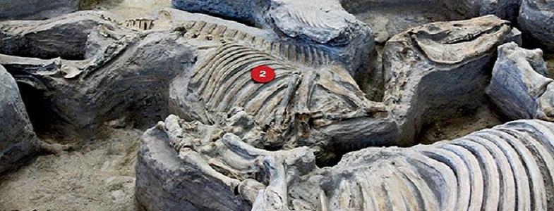 Бруно-Джарбидж останки