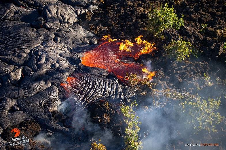 Лава Килауэа уничтожает деревья