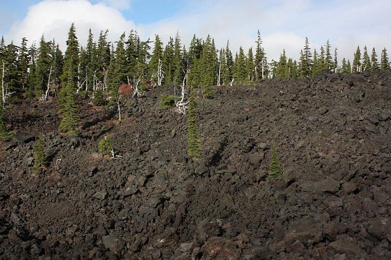 Деревья на андезитовых лавах рядом с конусом Колье