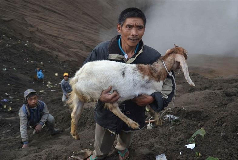 Бромо коза