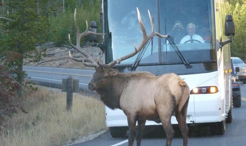 Йеллоустоун автобус