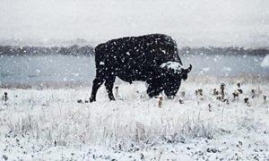 Йеллоустоун зима