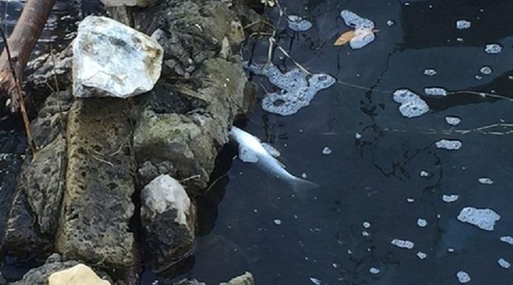 Кампи-Флегрей рыба